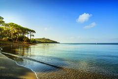 Punta Ala, Pine tree group, beach and sea bay. Tuscany, Italy - stock photo
