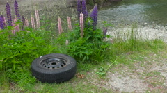Lupins and trash Stock Footage