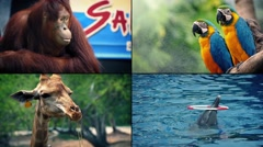 Zoo Animals Montage Stock Footage