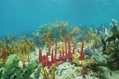Sea sponges diversity underwater Caribbean sea - stock photo