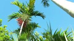 Palm Trees Clear Sky Tilt Down in the Bahamas Stock Footage