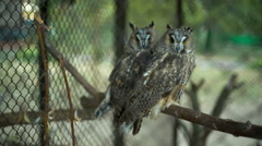 Owls in the zoo Stock Footage