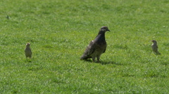 Three birds in Iulius Park in Cluj-Napoca Stock Footage