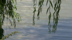 Branches over the lake in Iulius Park in Cluj-Napoca Stock Footage