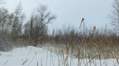 Winter bog landscape with dry reed on foreground at snowy cloudy day Stock Footage
