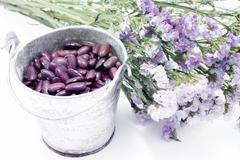 Red kidney bean and static flower - stock photo