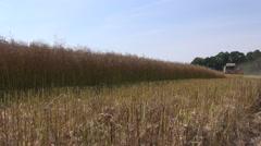 Harvester harvesting rapeseed - stock footage