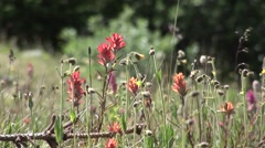 Wildflowers in Rocky Mountains Stock Footage