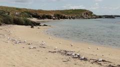 Beautiful white sand beach on Penguin Island - stock footage