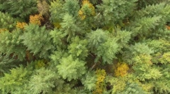 Forest of fir trees in Isere, France – aerial view by drone Stock Footage