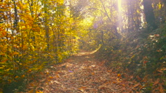 Walking in the Woods in Autumn Stock Footage