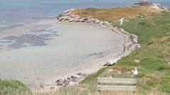 Lagoon nature reserve on Penguin Island Stock Footage