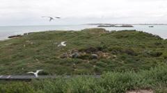 Sea gulls birds gliding in wind, Australia Stock Footage