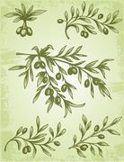 Vintage olive branch Stock Illustration