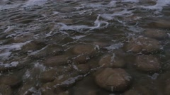 Thrombolites in Lake Clifton - stock footage