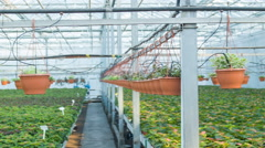 Enormous professional greenhouse in daylight - stock footage