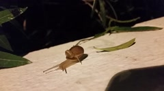 Two snails - big and small crawling on the wall Stock Footage