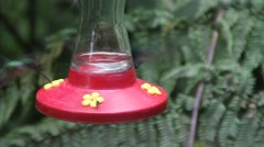 Hummingbird at the feeder in Mindo, Ecuador. Stock Footage