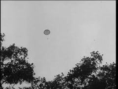 Low angle shot of parachutist descending behind trees, 1961 Stock Footage