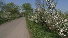 River dike + pan old growth apple trees in bloom. Betuwe, The Netherlands Stock Footage