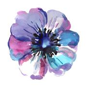Watercolor illustrations of blue flower isolated on white background Stock Illustration
