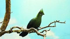 parrot on tree - stock footage