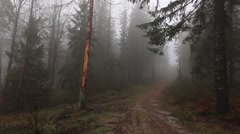 Mist in forest HD Stock Footage