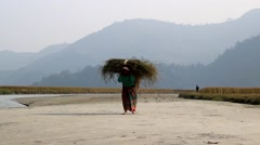 A woman carrying an armful of cut grass along the river`s shore Stock Footage