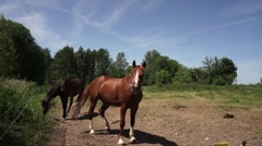 Horses in the paddock on a background sky Stock Footage