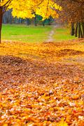 autumn alley with fallen leaves - stock photo