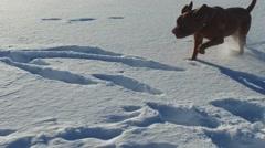 Super slow motion dogue de bordeaux (dog) runs in snow Stock Footage