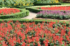 Topiary in an English Formal Garden - stock photo