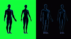 Human male female body scan.Rotate motion. Green screen 4k footage Stock Footage