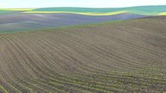 Beautiful spring landscape. Stock Footage