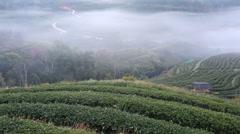 Tea plantation in morning view, Ang-Khang Thailand Stock Footage