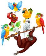 Chimpanzee and many birds on the branch Stock Illustration