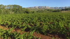 Vineyard and Sainte-Victoire mountain, Bouches-du-Rhone, France – aerial view by Stock Footage