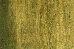 grunge wood texture, green, paint, yellow, - stock photo