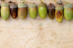 Acorns, oak, wooden background Stock Photos