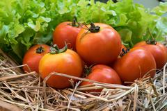fresh tomatoes and Hydroponic vegetables in a wooden crate - stock photo