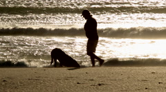 Dog digging in the sand Stock Footage