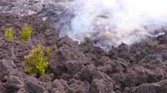 4K RAW Lava Flow And Vegetation 08 Stock Footage