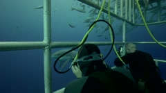 Great white sharks, Guadalupe Island, Mexico - stock footage