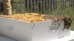Beekeeper removes honeycomb from beehive. Stock Footage