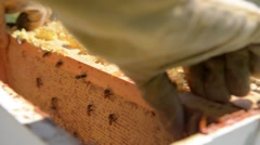 Closeup of beekeeper removing honeycomb frame from hive. - stock footage