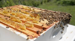 Swarm of bees on an open hive in the garden. Stock Footage