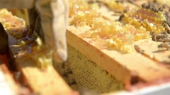 Closeup of beekeeper removing honeycomb frame from hive. Stock Footage