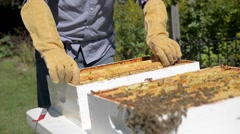 Beekeeper removes honeycomb frames from beehive. - stock footage