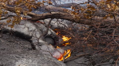 4K RAW Lava Flow And Vegetation 21 - stock footage