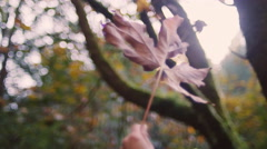 A large autumn leaf being spun in the air, with bokeh Stock Footage